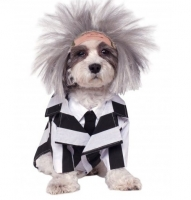 Halloween Beetlejuice Pet Dog Fancy Dress Costume